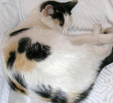 annonces cat gorie animaux perdus chats. Black Bedroom Furniture Sets. Home Design Ideas