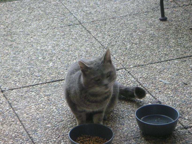 chat en Villeurbanne