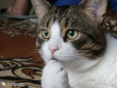 """Résultat de recherche d'images pour """"chat de gouttière gris"""""""