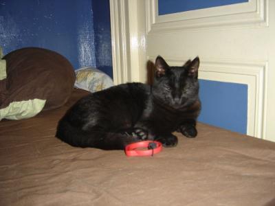 Trouver chatte noire