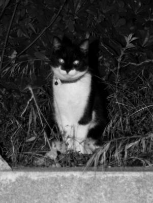 Salvatore grosse chatte