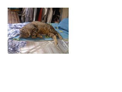 annonces cat gorie animaux perdus une personne objets trouves objets perdus. Black Bedroom Furniture Sets. Home Design Ideas