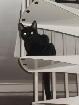 perdu petite chatte noire une personne. Black Bedroom Furniture Sets. Home Design Ideas
