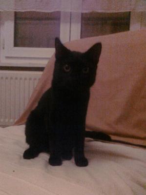 Trouve Petit Chat Noir Perdus Fr Retrouver Une Personne Objets