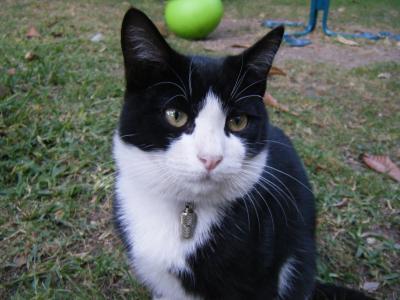 noir couleur chatte français chatte porno