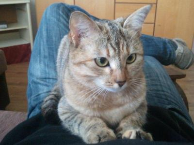 chat elancourt