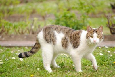 noir chatte gal blanc chatte porno films