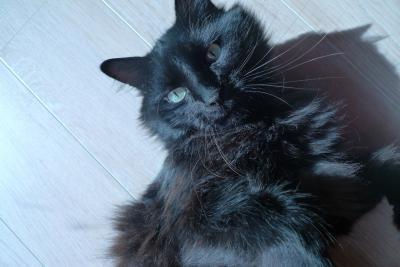 noir chatte gal sale désordre anal sexe