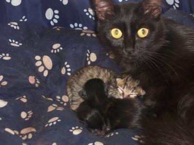 Gros tubes de chatte noire