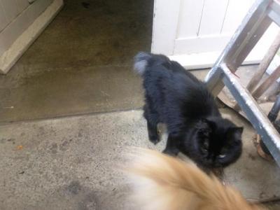 Nouvelles photos de chatte noire