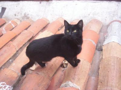 noir homme sucer la chatte