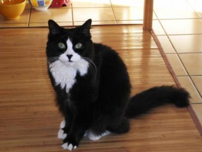 noir & blanc chatte blanc grosse chatte pic