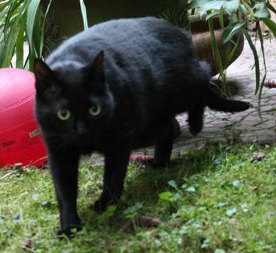 Une vilaine chatte - 4 2