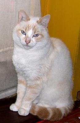 noir caramel chatte noir fille blanc Guy porno Hub
